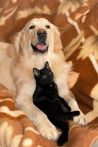 giving pets as gifts- Click to view pet supplies on Amazon