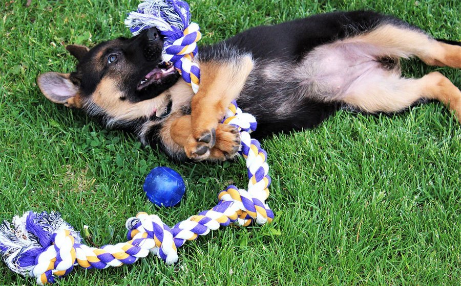 Practical Pet Dog Squeak Toy With Rope Handle Or Interactive Play Best For Puppies Home & Garden Pet Products