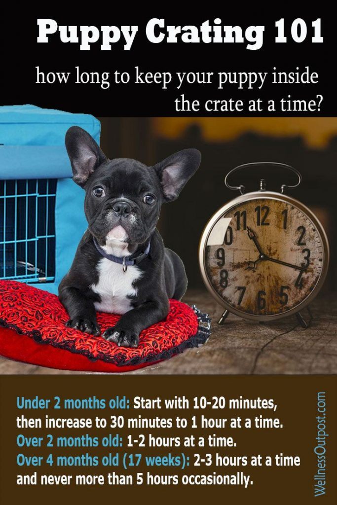 How long to crate train puppies