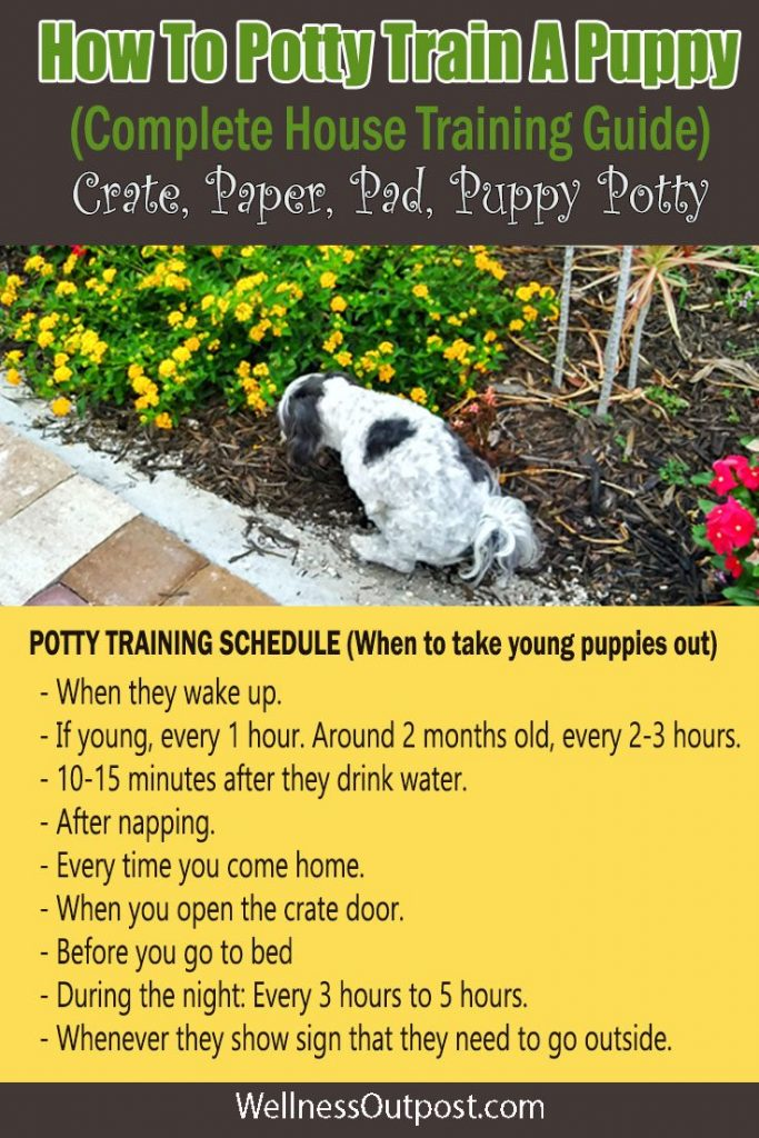 Potty train a puppy pin