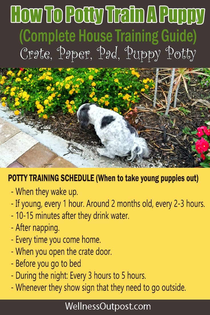 How To Potty Train A Puppy Complete