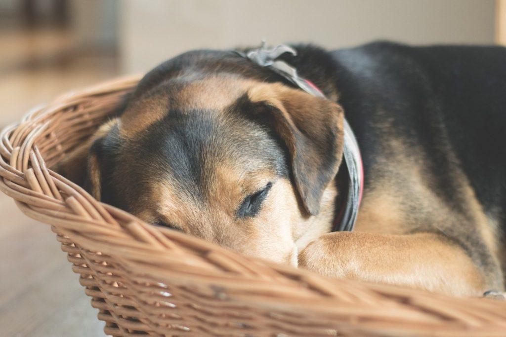 Dog resting in a basket